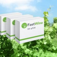 FastWine in the Latin America's top ten most innovative product for viticulture