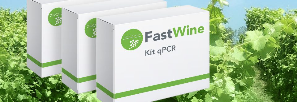 FastWine: the technology to detect contaminants in wine production