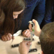 Students from ten schools will sequence pill bugs in contest by 1000 Genomas Chile