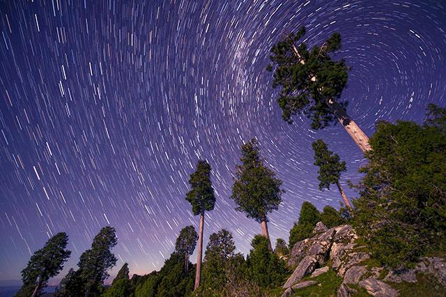 Vista de bosque de alerces contra cielo nocturno, las estrellas se ven como líneas curvas